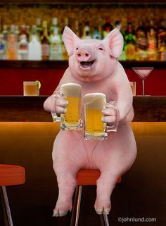 A pig sits on a stool in a bar with a mug of frothy beer in each hand in this funny animal picture created for a humorous greeting card and available as a stock photo image. Pet Pigs, Baby Pigs, This Little Piggy, Little Pigs, Funny Pig Pictures, Funny Animals, Cute Animals, Happy Pig, Cute Piglets
