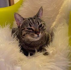 My son's cat: Oj