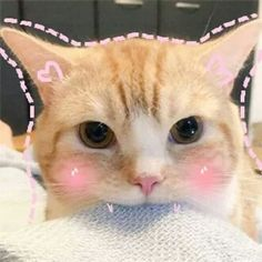 can be resil Kittens can be resilient creatures. However when you bring a new home you still need to plan for a period of adjustment before inviting everyone you know to come for a visit I Love Cats, Cool Cats, Gatos Cool, Cat Icon, Cat Aesthetic, Kawaii Cat, Cute Kittens, Baby Cats, Cat Memes
