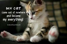 (>'.'<) ᙖҽąմ৳ἶƒմℓ Ꭿɲἶɱąℓʂ (ᵔᴥᵔ) ~ Cat quotes: MY CAT came out of nowhere and became my everything!