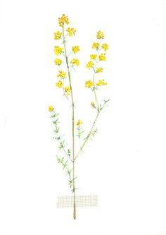 NEW painting in Sjoesjoe shop! Field flower water colour painting 1