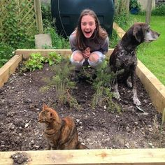 What is it with my raised bed! Can everybody please get out of it!!! #raisedbeds #lettuces #gsp #catsofinstagram