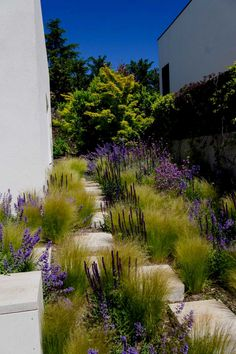 Landscape Design, Garden Design, Stipa, Prairie Garden, Small Backyard Landscaping, Backyard Patio, Garden Styles, Garden Planning, Garden Furniture