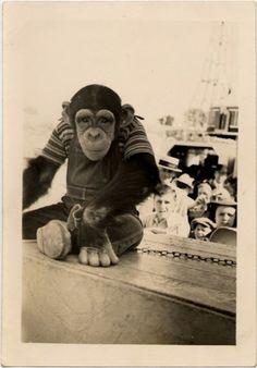 Young Dressed Chimpanzee at Circus, c. 1930