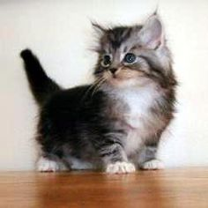 Fun Facts About Kittens - Trupanion Pet Insurance