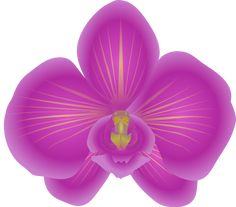 CLIPART FLOWERS | Free to Use & Public Domain Orchid Flower Clip Art
