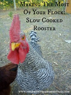 Easy Slow Cooked Rooster