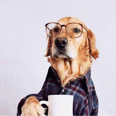 LOL dog coffee