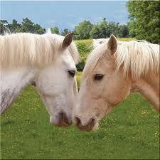 paarden - Google zoeken