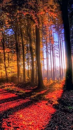 Autumn Road, the way the light shines through the trees...
