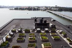 Roof top garden in Helsinki #rooftopgardening