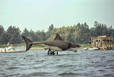 vintage everyday: Color Photos from the Filming of Jaws on Katama Bay, Martha's Vineyard in 1974