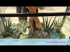 ▶ DIY Succulent Aquarium - YouTube