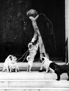 Duchess of Windsor with her 5 Pugs, who traveled with the Windsors where ever they went.  She had Pug needlepoint pillows and assorted bric a brac of Pugs...