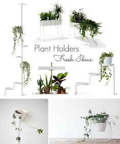 The Design Chaser: Indoor Plants | Fresh Ideas