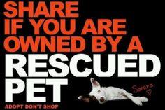 I <3 my rescue