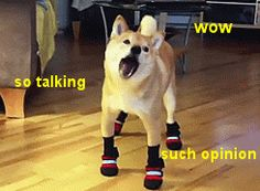 New trending GIF on Giphy meme memes talking talk sarcastic doge unimpressed idc i dont care opinion bfd funny memes hilarious gif Funny Doge, Doge Meme, Funny Memes, Hilarious, Funny Gifs, Animal Memes, Funny Animals, Cute Animals, Dog Humor