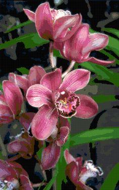 Orchids. Free cross stitch pattern