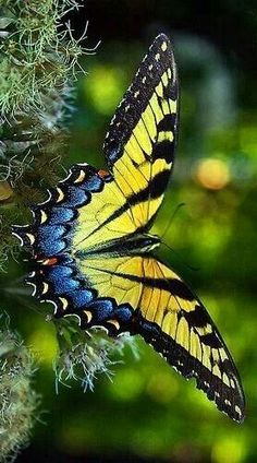 Swallowtail Butterfly beautiful colors and patterns on wings Papillon Butterfly, Butterfly Kisses, Butterfly Flowers, Butterfly Wings, Monarch Butterfly, Flying Flowers, Butterfly Mobile, Paper Butterflies, Vintage Butterfly