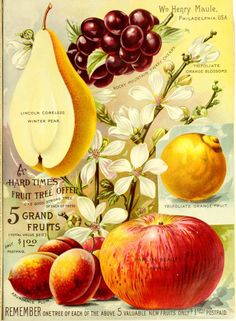 Maule's seed catalogue page : 1895