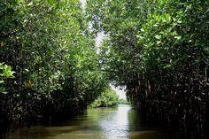 Pichavaram Mangrove Forests, Tamil Nadu    Link to entire photo set : http://10yearitch.com/india-travel-tour/tamil-nadu/photo-post-pichavaram-mangrove-forest-tamil-nadu/
