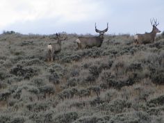 This is where the buck stops..., taken by Kathy O'Day