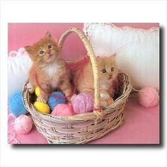 Cat Basket Pictures