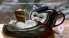 Animals fantasy art books owls creatures coffee cups Wallpaper free desktop backgrounds and wallpapers Owl Wallpaper, Wallpaper Backgrounds, Most Beautiful Paintings, Funny Owls, Owl Tree, Christmas Owls, Wise Owl, Osho, Metal Wall Art