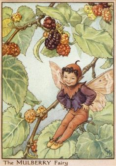 Cicely Mary Barker - Mulberry