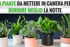 Metti una di queste piante in camera per dormire meglio la notte