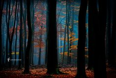 Enchanted by Lars van de Goor on 500px