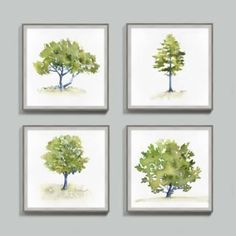 This watercolor collection celebrates new growth with fresh spring color. Presented like a portrait, each image captures a single tree in lush green tones against a crisp white background.