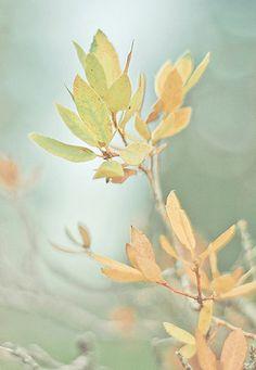 Autumn Softness