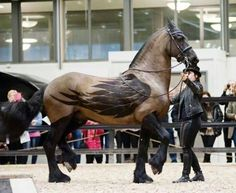 Beautiful clipping design on a horse. - Imgur