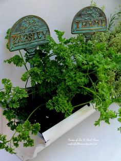 DIY ~ Bring the garden in this fall! Indoor Windowsill Windowboxes From Gutters!   http://ourfairfieldhomeandgarden.com/diy-windowsill-windowboxes/
