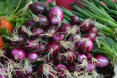 In a study to examine how effective different varieties of onion are at killing cancer cells, a team of scientists at the University of Guelph has found that not all of them are created equal. Food Science, Mini S, Planting Seeds, No Cook Meals, Onion, Harvest, Canning, Golf Ball, Small Spaces