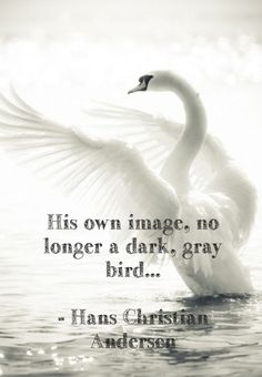 """Full quotation: """"His own image; no longer a dark, gray bird, ugly and disagreeable to look at, but a graceful and beautiful swan. To be born in a duck's nest, in a farmyard, is of no consequence to a bird, if it is hatched from a swan's egg."""" - Hans Christian Andersen, The Ugly Duckling"""