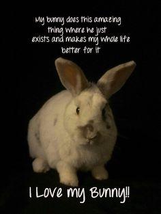 My bunny makes my life better. Fluffy Bunny, Cute Baby Bunnies, Funny Bunnies, Animals Beautiful, Cute Animals, Baby Animals, Poodles, Bunny Quotes, Bunny Care