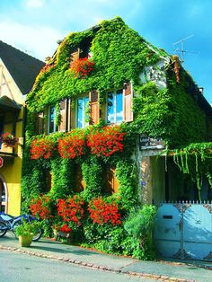 FRANCE PHOTO. BERGHEIM HOUSE (ALSACE).