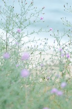 beach flowers #Jacobscreek #myperfectpicnic