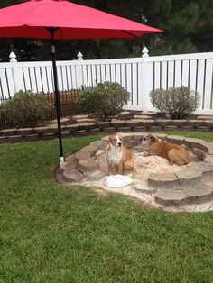 Backyard Ideas For Dogs this would be such a cute idea for a place for the dog to pee Find This Pin And More On Dog Beds