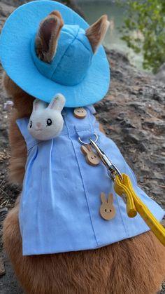 Pet Bunny Rabbits, Pet Rabbit, Cute Little Animals, Cute Funny Animals, Bunny Leash, Bunny Harness, Cute Bunny Pictures, Bunny Cages, Cute Baby Bunnies