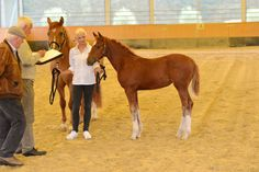 Fohlen 2015 - Riverside Curly Horse Ranch - Europa's größte Curly Zucht