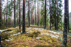 Salon rajalta muutama kilometri Koskelle tl päin sijaitsee muinaisen Ancylusjärven rantadyynit. http://www.naejakoe.fi/luontojaulkoilu/muinaisen-ancylusjarven-rantadyynit-koski-tl/ #ancylusjärvi