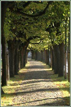 This path is called het Trouwlaantje (Oisterwijk). Het Trouwlaantje, het pad midden op De Lind, is omzoomd door 200 jaar oude lindebomen. Het lindeblad heeft de vorm van een hartje. Jaarlijks wandelen vele bruidsparen door dit romantische laantje naar het raadhuis van Oisterwijk om elkaar het jawoord te geven. Het mooie raadhuis met een torentje, een carillon en een stenen bordes dat u nu ziet is in 1899 gebouwd. In de Middeleeuwen stond hier een kapel, die na 1648 als school en na 1728 als…