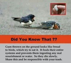 If you have some used chewing gum, try throwing it on the ground. It's dangerous to birds. Thanks!
