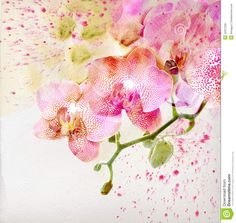 Watercolor Orchid Watercolor orchid royalty