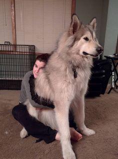das ist mal ein hund :)