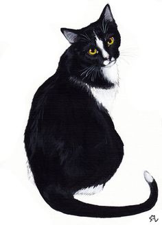Brutus- a kitty not so innocent as he looks. He actually came to us accidentally, he was still a little kitten, confused and looking troubled, but we could not give him away anymore, we fell in lov. Watercolor Cat, Watercolor Animals, Gato Animal, Cat Sketch, White Cats, Cat Drawing, Graphic, Animal Drawings, Pet Portraits