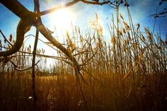 Dum Spiro Spero by mbenford  #nature